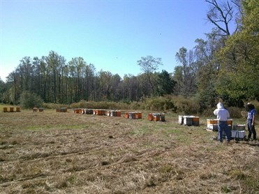 50 colony apiary